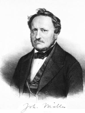 Johannes P. Muller