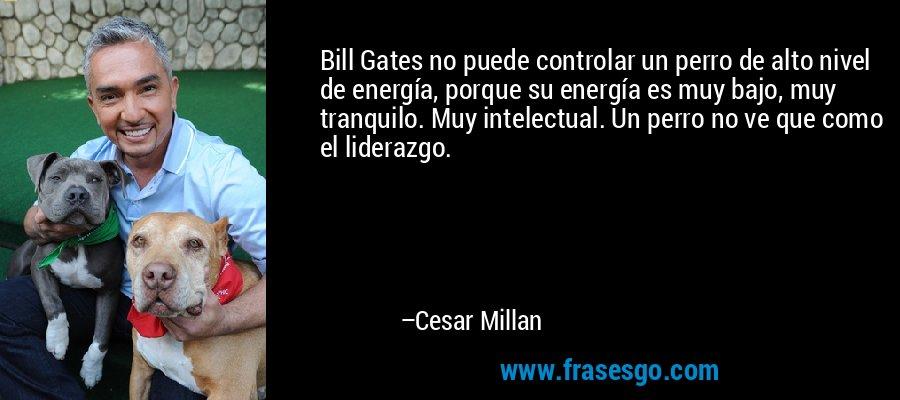 Bill Gates no puede controlar un perro de alto nivel de energía, porque su energía es muy bajo, muy tranquilo. Muy intelectual. Un perro no ve que como el liderazgo. – Cesar Millan