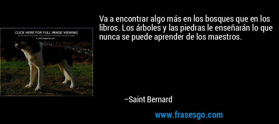 Va a encontrar algo más en los bosques que en los libros. Los árboles y las piedras le enseñarán lo que nunca se puede aprender de los maestros. – Saint Bernard