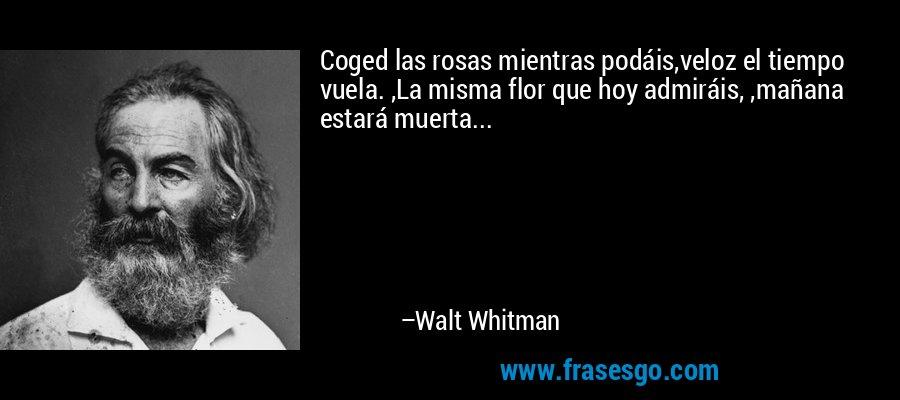 Coged las rosas mientras podáis,veloz el tiempo vuela. ,La misma flor que hoy admiráis, ,mañana estará muerta... – Walt Whitman